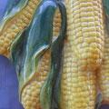 Detalle del racimo de mazorcas de maíz