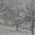 Schneetreiben im Frühjahr - © Thomas Kruschina