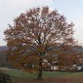 Herbst  - © Thomas Kruschina