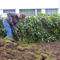 Neuer Rasen anlegen: Bestehende Wiese abschälen (Hilfsarbeiter: Kevin)