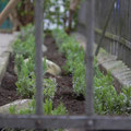 Neuer Sitzplatz: Vorhandene Rabatte mit Lavendel bepflanzen abgedeckt mit Geröll