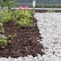 Steingarten: Rabatte mit Rosen pflanzen und schnitzeln