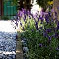 Neuer Sitzplatz: Sitzplatz Abdeckung mit Kies und vorhandene Rabatte mit Lavendel bepflanzen und Geröll abdecken