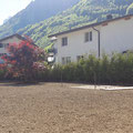 Rasen anlegen + Solitärbaum pflanzen