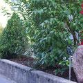 Umänderung Rabatte: Bepflanzung & Stein (Rotacker) setzen