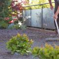 Neuer Rasen: Abkräulen