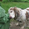 Betsi, 3514, 2007 - 10/2012 en el Albergue, adoptado en Alemania