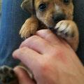 yuli, recogido y adoptado en noviembre 2011