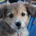 Nahla - la ultima de los cachorros peludos, adoptado en Javea