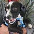 Celine, adoptado 04/2013