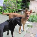 Clara - adoptado de cachorro en 2012