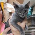 gatito - adoptado junto con su hermana en 2012