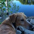 Ruby, 2844, 2007 (con 10 meses) hasta 2012 en el albergue, fue muy miedosa, ahora vive en Alemania, que suerta para ella