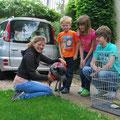Rocky, entra 2/2010 - adoptado de una familia en Holanda en Junio 2012