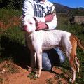 7231 entro 06/2012 - 03/2013, adoptado en Gandia