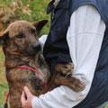 5417 Tessa, entra 2009 de cachorro - adoptado 2013