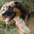3360 - Chico (antes Ciriaco), 08/2007 (cachorro) - 01/2014, D