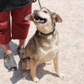 2349 Cleo, entra 2006 de cachorro - adoptado 2013 en Alemania