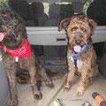 4019 Nox (derecha),04/2008-08/2013, un perro especial - adoptado en Alemania