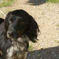 Larsson, adoptado 2012 en Alemania