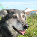 1790, Wolf, 2004 (cachorro) - 01/2014, NL