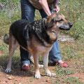 4575 Max, 09/2008-11/2013, adoptado en Alemania