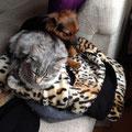 casandra, ahora Luna, abandonado de cachorro