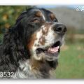 Toffee - 2012 - 04/2013, adoptado en Holanda