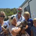 dos gatos adoptado en Gandia 08/2014