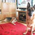 4438 - Kara (antes Luna) - 2008 - 2012 en el albergue, adoptado con 8 años en Alemania