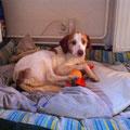 2539 Tom, entro 2006 de cachorro, adoptado 2012 en Alemania