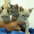 tres gatitos, abandonado de cachorro sin madre