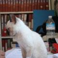 cachorra - adoptado en el albergue en septiembre