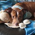 4687 Flavio, ahora Fluffy - 2008-2012 en Gandia, ahora en Alemania