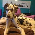 7345/7346 Mulder & Scully, adoptado junto marzo 2013