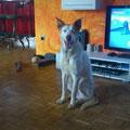 3759 Rocco grande, 2008-2012, Germany 2012