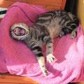 Eddie, adoptado 03/2014, d