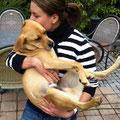 Simba, adoptado en 2012 ein Alemania