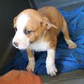 7619 adoptado en Gandia en 07/2013