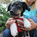 Niko, entado atropellado, adoptado 11/2013