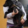 Lotte, adoptado 05/2013