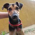 7740, Pepe adoptado en Gandia 10/2013