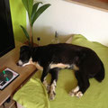 4540 Freia, 2008-12 en el albergue, adoptado 2012 en Alemania