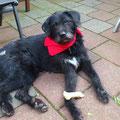 Mike (antes Freddy), 6292, 07/2010 - 08/2012 en el albergue, adoptado en holanda
