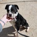 7437 Benji, adoptado 05/2013