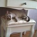 Juna, adoptado en octobre