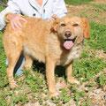 Cosima, 4197, 2008 - 2013 en el albergue, entra de cachorra, Alemania