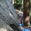 Rock climbing in Squamish: Basislager der Klettergemeinde.
