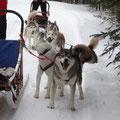 """Hundeschlitten-Tour in Ontario: """"Gehts endlich los? Wir sind soweit."""""""