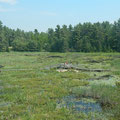 Grüsse aus dem French River Provincial Park in Ontario.